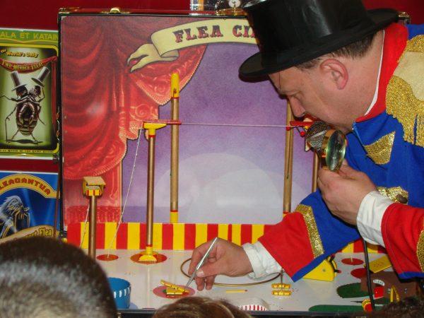 De Wondere Wereld van Pinokkio, Sinterklaasfeest